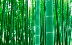 Бамбук живёт долго, но погибает сразу после цветения.