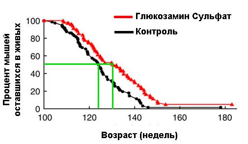 Глюкозамин сульфат тормозит процесс старения