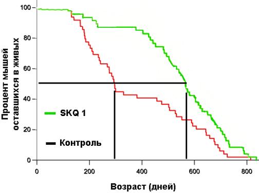 SKQ 1 тормозит процесс старения и в два раза продлевает МедПЖ