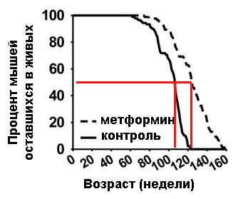 Метформин тормозит процесс старения