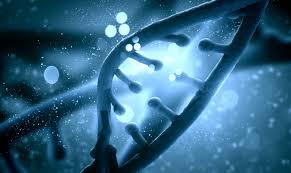 Ген АТR1 и старение человека