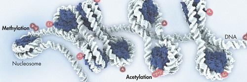 Витамин B6 участвует в процессах метилирования.