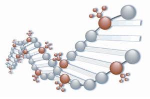 Маленькие шарики в ДНК- это метильная группа.