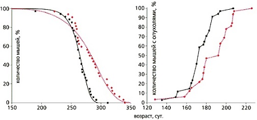Интересный факт. Как видно на графике - лекарство метформин в экспериментах на мышах продлевало жизнь и снижала частоту раковых опухолей