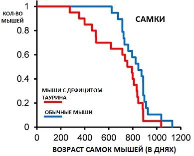 Таурин тормозит старение мышц и продлевает жизнь самок, но гораздо меньше, чем самцов
