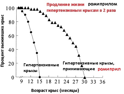 Специальная линия крыс, болеющая наследственно гипертонической болезнью, получала с молодости Рамиприл (лекарство от давления) и в результате получила продление и средней и максимальной продолжительности жизней в два раза