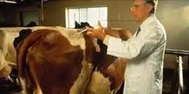 Антибиотики используют для профилактики и лечения сельскохозяйственных животных