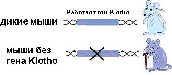 blokada-1