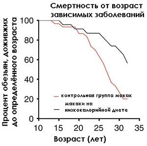 Оптимально-калорийное питание замедляет старение приматов, а скорее всего и старение людей