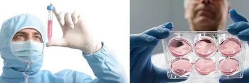 Обратить возраст стволовых клеток вспять