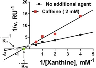 Кофеин является слабым конкурентным ингибитором ксантиноксидазы
