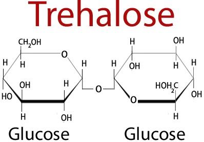 Трегалоза в кишечнике и не только под действием фермента трегалазы метаболизируется в две молекулы глюкозы