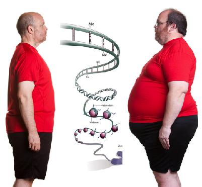 Похудение врачи: тесты, советы врачей и питание | китайская.